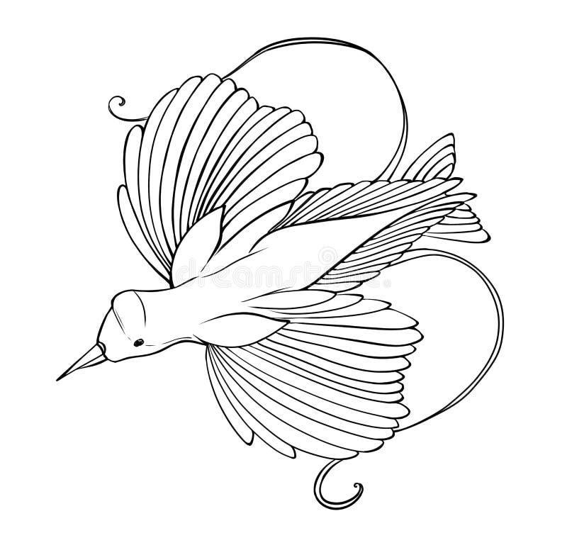 Χρωματίζοντας σελίδα πουλιών του παραδείσου διανυσματική απεικόνιση
