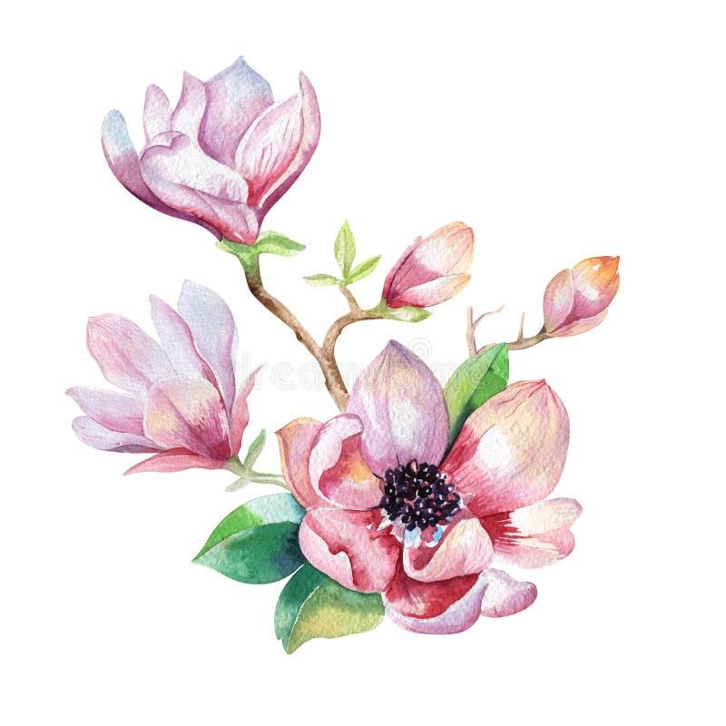Χρωματίζοντας ταπετσαρία λουλουδιών Magnolia Συρμένο χέρι Watercolor floral διανυσματική απεικόνιση