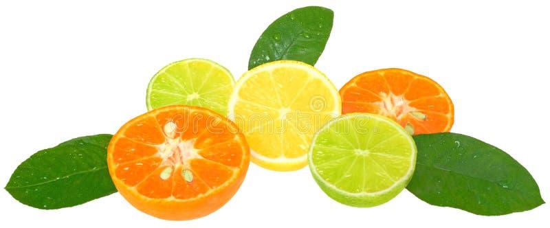 χρωματισμένα συρμένα πορτοκαλιά μολύβια ζωής λεμονιών χεριών ακόμα στοκ φωτογραφίες με δικαίωμα ελεύθερης χρήσης