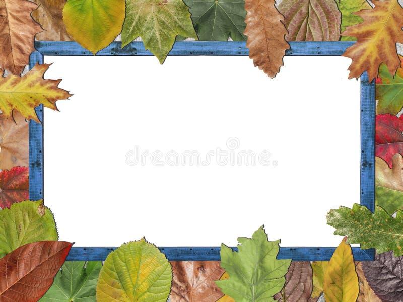 Χρωματισμένα φύλλα φθινοπώρου με το μπλε ξύλινο πλαίσιο εικόνων στοκ φωτογραφία