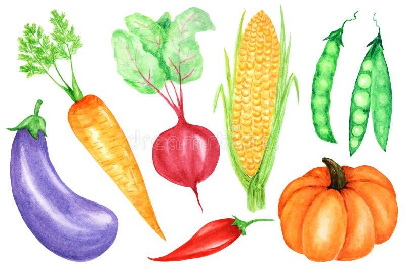 Χρωματισμένη Watercolor συλλογή των λαχανικών Συρμένα χέρι φρέσκα vegan στοιχεία σχεδίου τροφίμων που απομονώνονται στο άσπρο υπό στοκ εικόνα