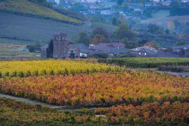 Χρωματισμένοι αμπελώνες κατά τη διάρκεια της εποχής φθινοπώρου Beaujolais στο έδαφος, φράγκο στοκ φωτογραφία με δικαίωμα ελεύθερης χρήσης
