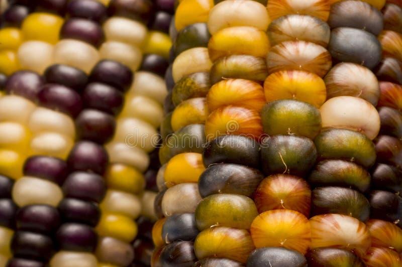 χρωματισμένος ινδικός αραβόσιτος καλαμποκιού πολυ στοκ εικόνες