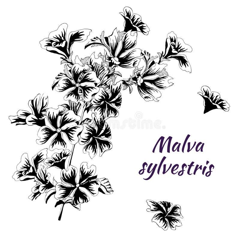 Χρωματισμένος στα λουλούδια μελανιού Malva sylvestris Γραπτή διανυσματική απεικόνιση σε ένα άσπρο υπόβαθρο Σκίτσο δερματοστιξιών απεικόνιση αποθεμάτων