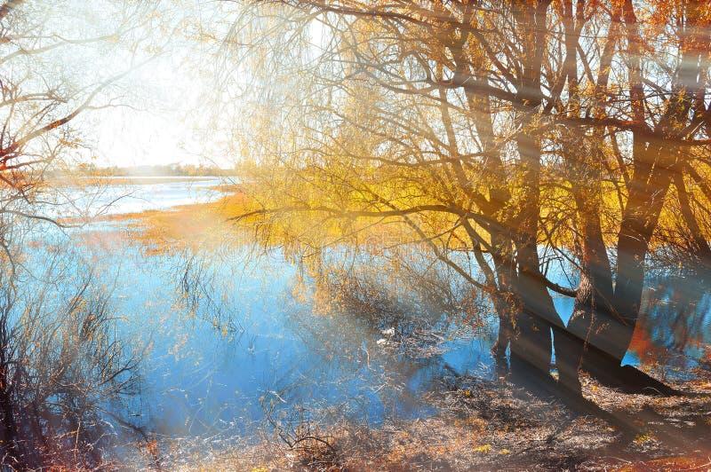 Χρωματισμένος utumn εξωραΐστε - κιτρινισμένη ιτιά φθινοπώρου κάτω από την ηλιοφάνεια στις όχθεις του μικρού ποταμού στο ηλιοβασίλ στοκ εικόνες με δικαίωμα ελεύθερης χρήσης