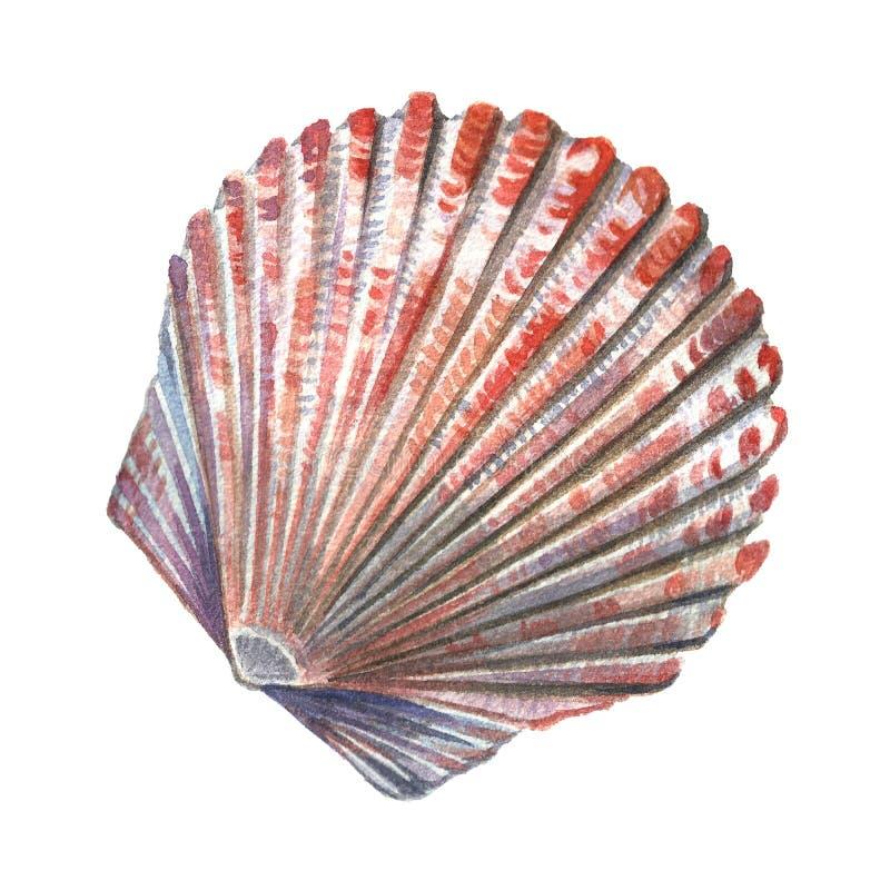 Χρωματισμένο κοχύλι watercolor θάλασσας Απεικονίσεις των κοχυλιών θάλασσας σε ένα W στοκ φωτογραφίες