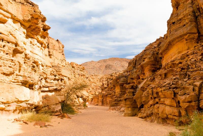 Χρωματισμένο φαράγγι με τις πράσινες εγκαταστάσεις νότιο Sinai της Αιγύπτου Dahab στοκ εικόνα με δικαίωμα ελεύθερης χρήσης