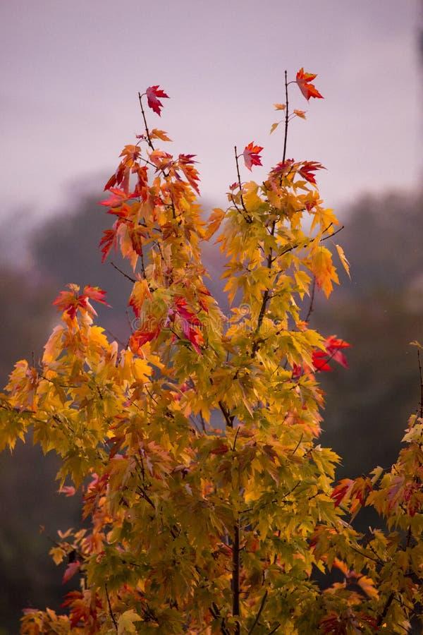 Χρωματισμένο φύλλωμα το φθινόπωρο στοκ φωτογραφία με δικαίωμα ελεύθερης χρήσης
