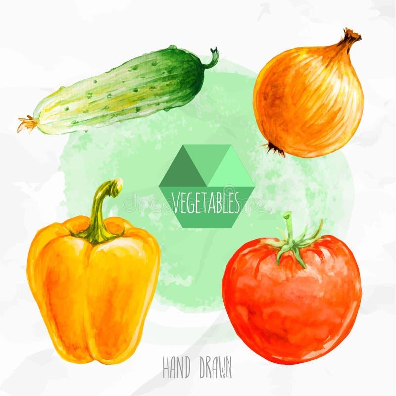 Χρωματισμένο χέρι αγγούρι Watercolor, κρεμμύδι, έγγραφο κουδουνιών και ώριμη ντομάτα ελεύθερη απεικόνιση δικαιώματος