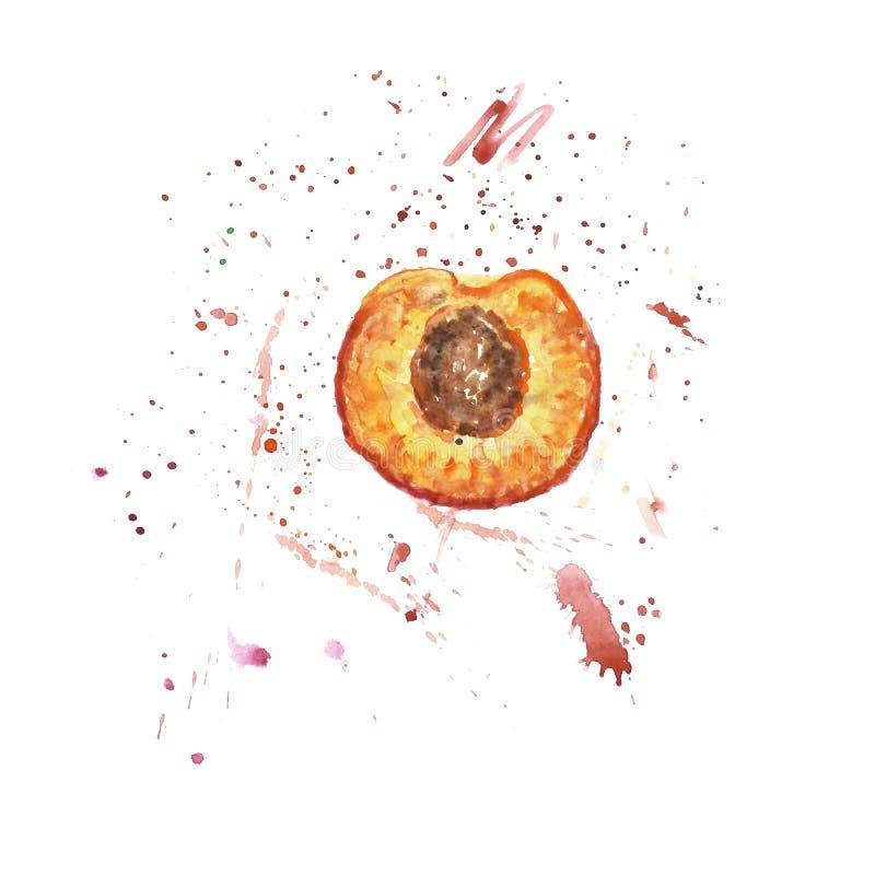 Χρωματισμένο χέρι μισό βερίκοκο Watercolor με smudges και τους παφλασμούς του χυμού Φρέσκια ώριμη απεικόνιση φρούτων διανυσματική απεικόνιση