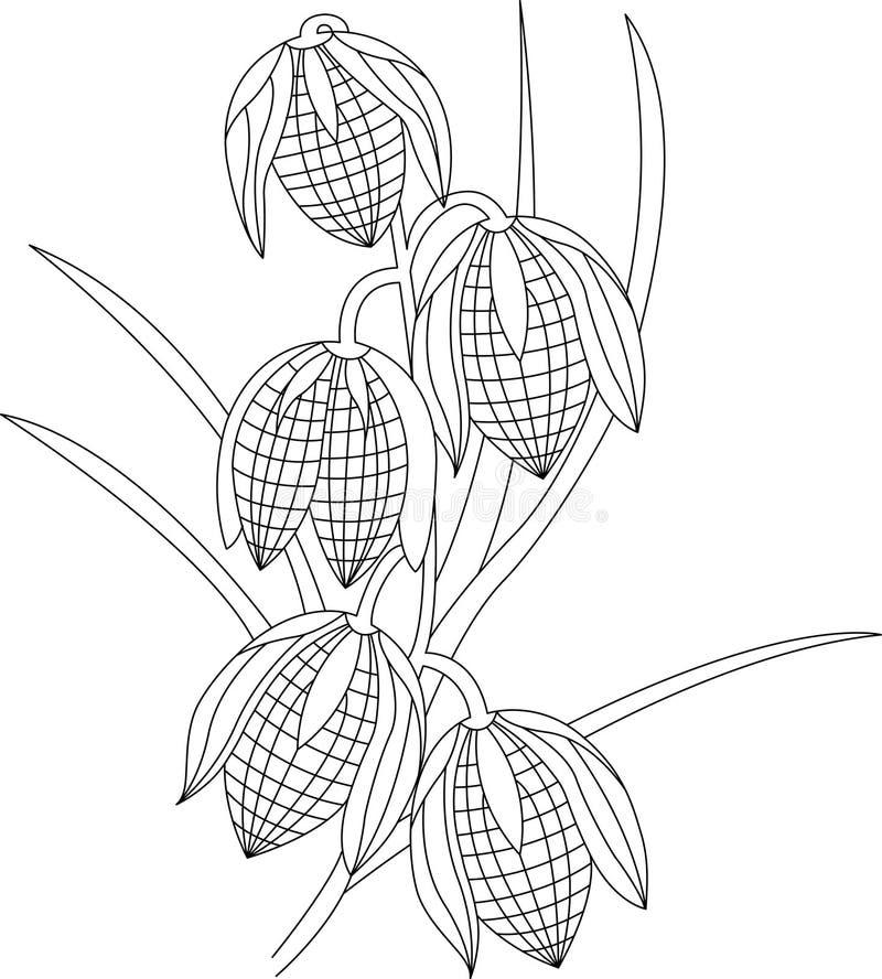 Χρωματισμός λουλουδιών για τους ενηλίκους απεικόνιση αποθεμάτων