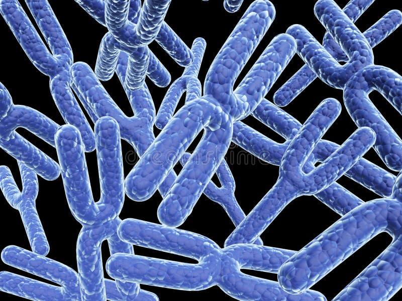 χρωμοσώματα x-$l*y απεικόνιση αποθεμάτων