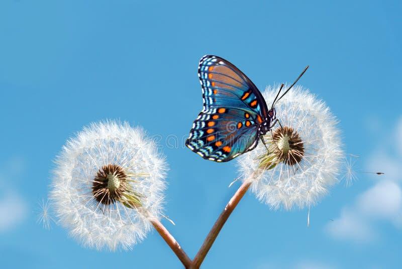 Download χρόνος άνοιξη στοκ εικόνες. εικόνα από έντομο, καλοκαίρι - 17053620