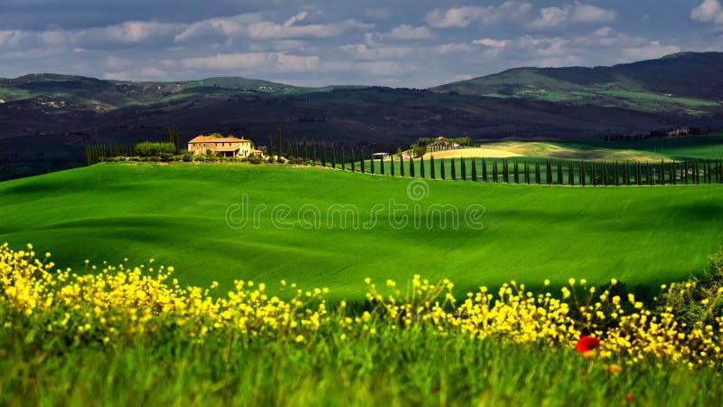 Χρόνος της Τοσκάνης την άνοιξη με τους πράσινους τομείς και τα κίτρινα λουλούδια στοκ φωτογραφία