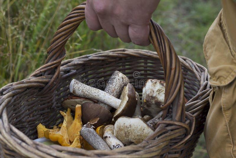 Χρόνος φθινοπώρου Εποχή επιλογής μανιταριών στοκ φωτογραφία