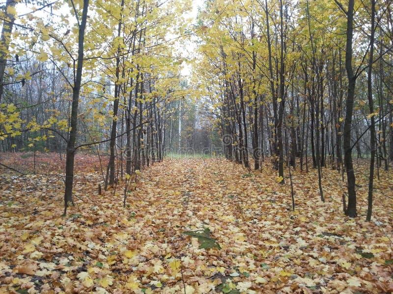 Χρόνος φθινοπώρου στοκ φωτογραφίες
