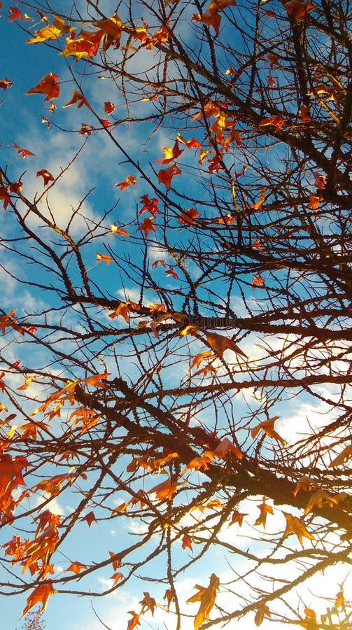 Χρώματα και αίσθηση της πτώσης στοκ φωτογραφία
