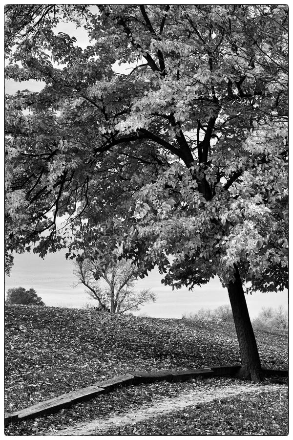 Χρώματα πτώσης στο τρόυ πάρκο, Ιλλινόις στοκ φωτογραφία με δικαίωμα ελεύθερης χρήσης