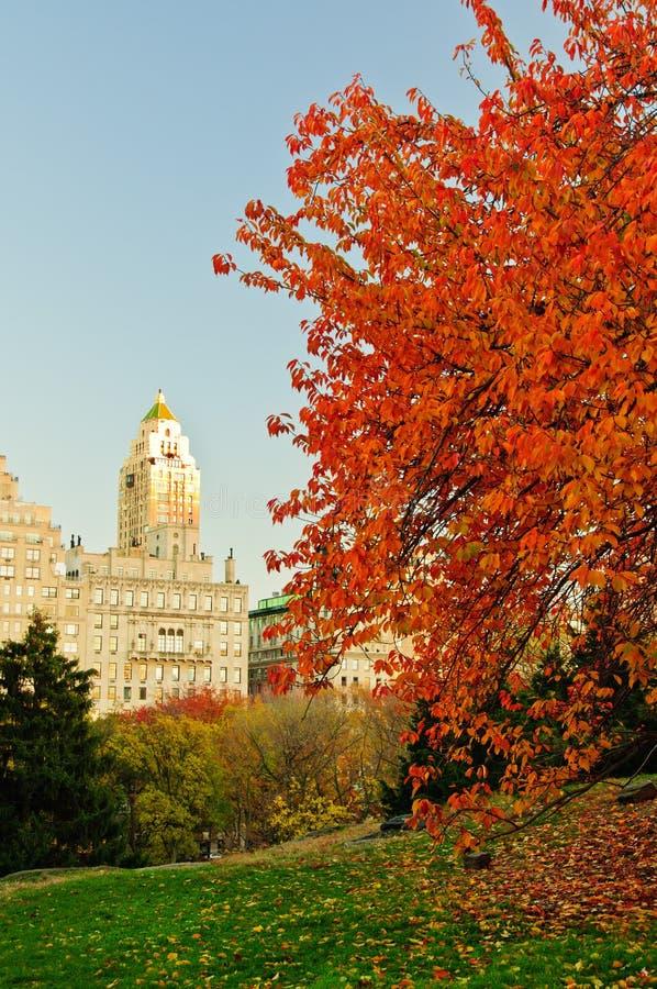 Χρώματα πτώσης στο Central Park. στοκ εικόνες