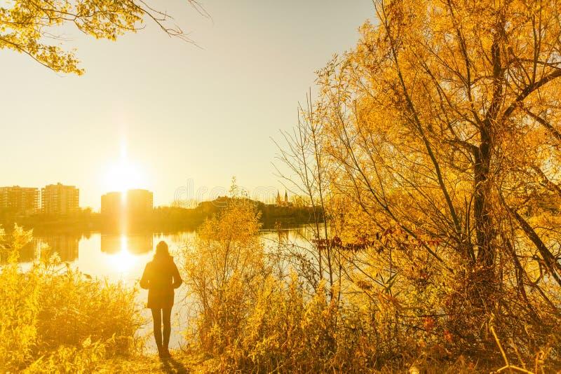Χρώματα πτώσης φθινοπώρου, κίτρινο κορίτσι φύλλων δέντρων που περπατούν στο πάρκο πόλεων Τρόπος ζωής φύσης στοκ φωτογραφία με δικαίωμα ελεύθερης χρήσης