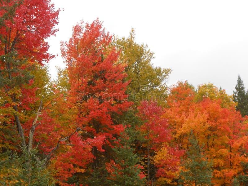 Χρώματα πτώσης Algonquin στο πάρκο στοκ εικόνα με δικαίωμα ελεύθερης χρήσης