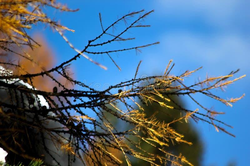 Χρώματα στις Άλπεις στοκ φωτογραφία με δικαίωμα ελεύθερης χρήσης