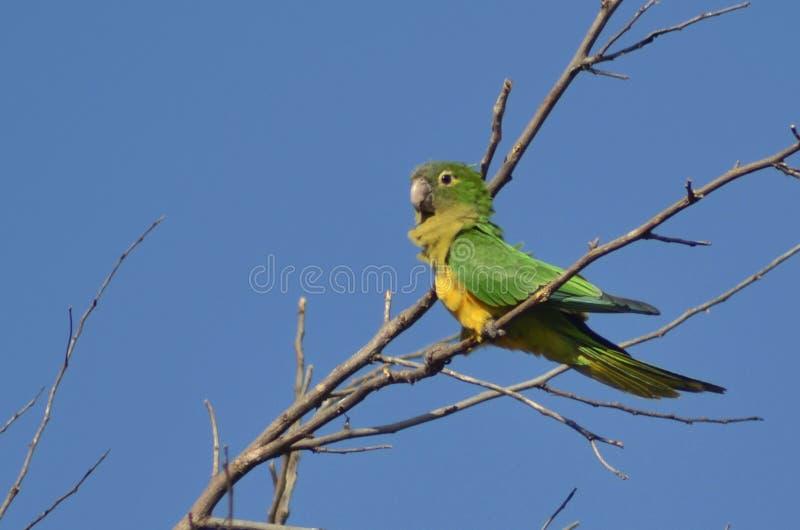 Χρώματα της Βραζιλίας και των τροπικών περιοχών στοκ φωτογραφίες με δικαίωμα ελεύθερης χρήσης