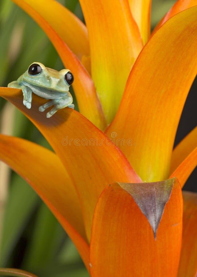 Χρώματα του τροπικού δάσους στοκ φωτογραφία με δικαίωμα ελεύθερης χρήσης