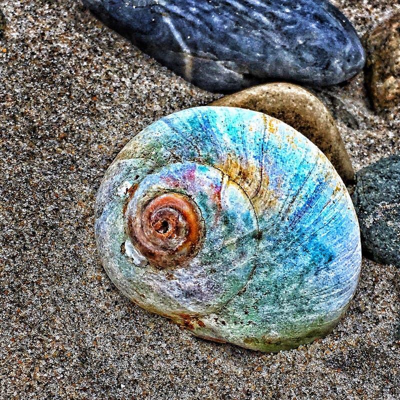 Χρώματα του Conch στοκ φωτογραφία με δικαίωμα ελεύθερης χρήσης