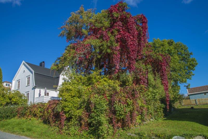 Χρώματα φθινοπώρου στον κήπο στοκ φωτογραφία