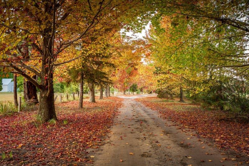 Χρώματα φθινοπώρου στους δενδρώδεις δρόμους στοκ φωτογραφία με δικαίωμα ελεύθερης χρήσης