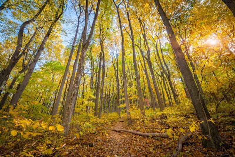 Χρώματα φθινοπώρου στο εθνικό πάρκο Shenandoah στοκ φωτογραφία