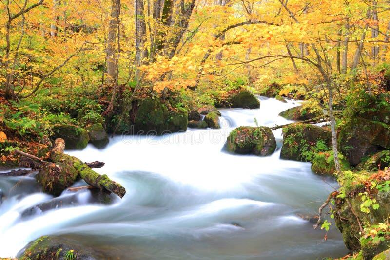 Χρώματα φθινοπώρου του ρεύματος Oirase στοκ φωτογραφία
