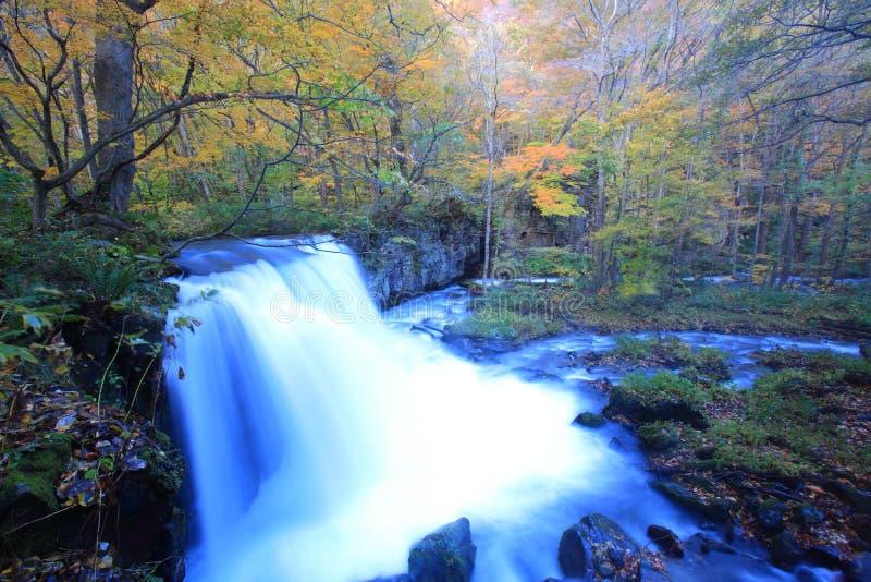 Χρώματα φθινοπώρου του ρεύματος Oirase στοκ φωτογραφίες