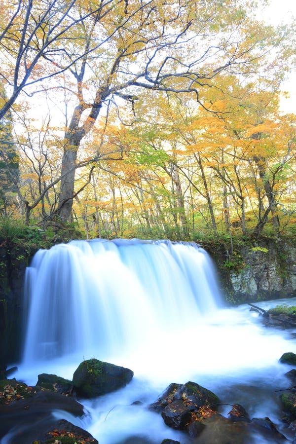 Χρώματα φθινοπώρου του ρεύματος Oirase στοκ εικόνες με δικαίωμα ελεύθερης χρήσης