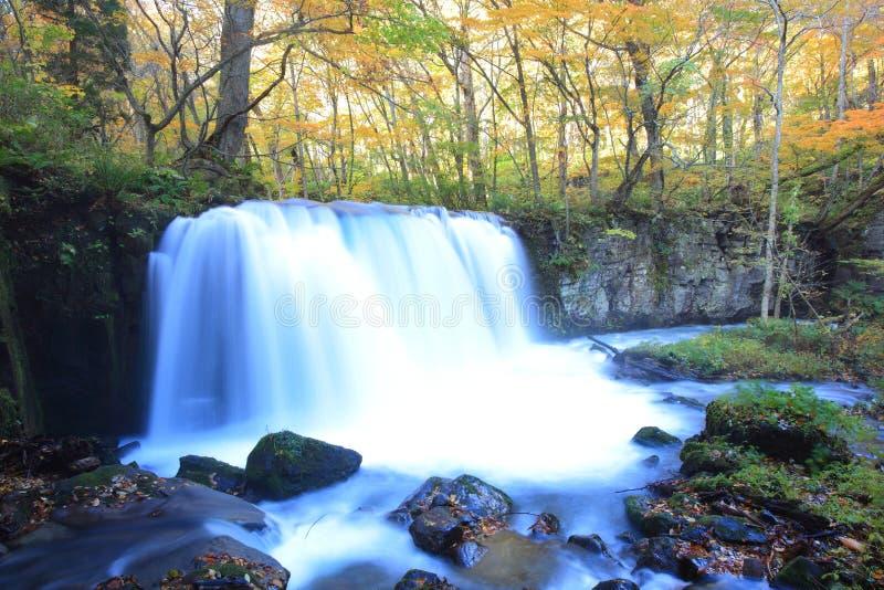 Χρώματα φθινοπώρου του ρεύματος Oirase στοκ εικόνες