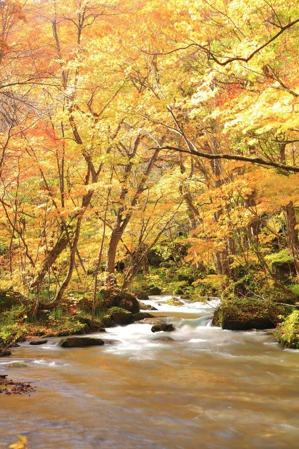 Χρώματα φθινοπώρου του ρεύματος Oirase στοκ φωτογραφίες με δικαίωμα ελεύθερης χρήσης