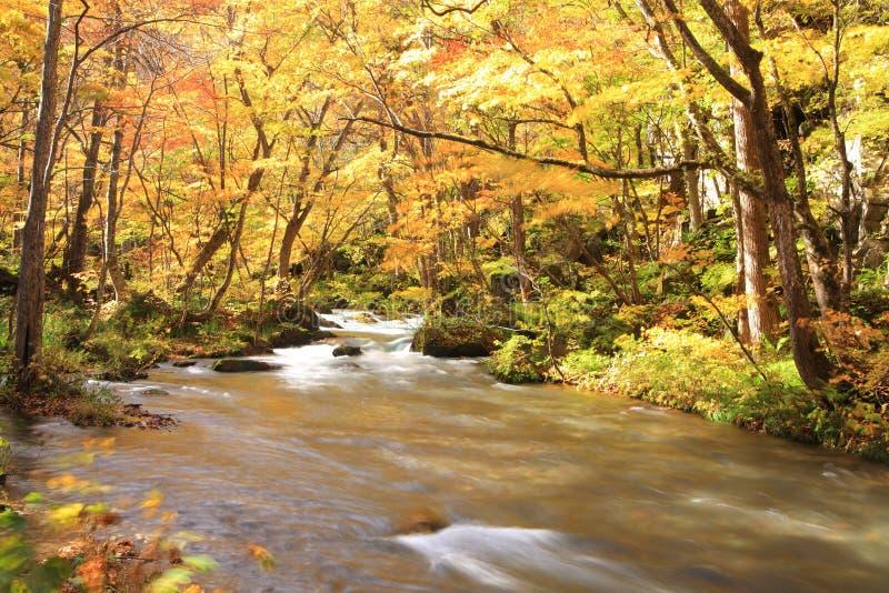 Χρώματα φθινοπώρου του ρεύματος Oirase στοκ εικόνα