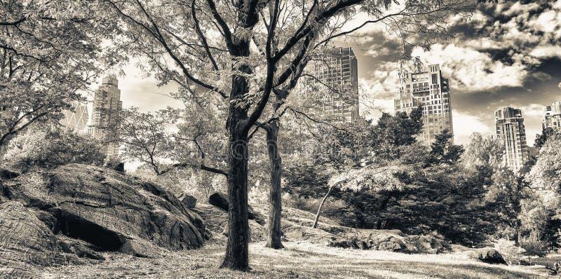 Χρώματα φθινοπώρου του Central Park, πόλη της Νέας Υόρκης στοκ φωτογραφία με δικαίωμα ελεύθερης χρήσης