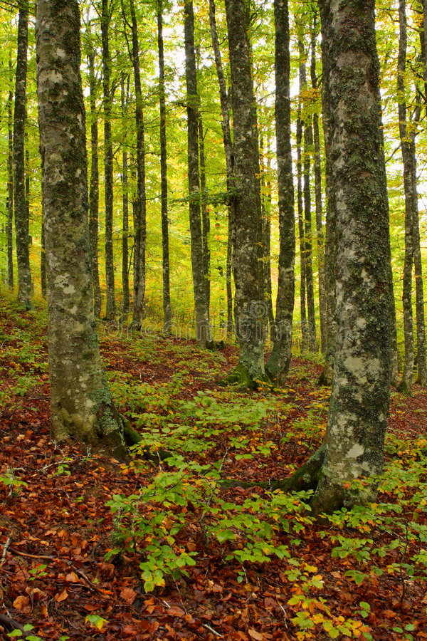 χρώματα φθινοπώρου στοκ φωτογραφία με δικαίωμα ελεύθερης χρήσης