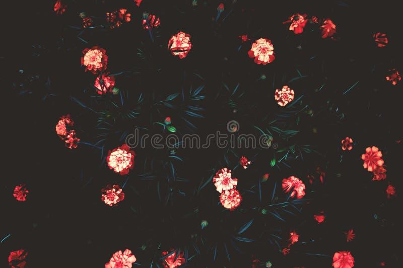Χρώματα φωτογραφίας τέχνης Λουλούδια σε ένα σκοτεινό υπόβαθρο στοκ φωτογραφία με δικαίωμα ελεύθερης χρήσης