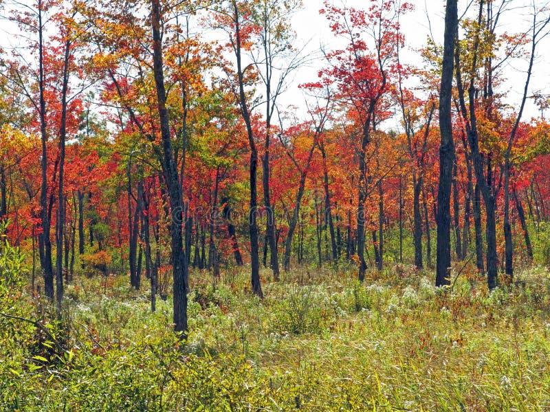 Χρώματα Berkshires μΑ πτώσης στοκ φωτογραφία