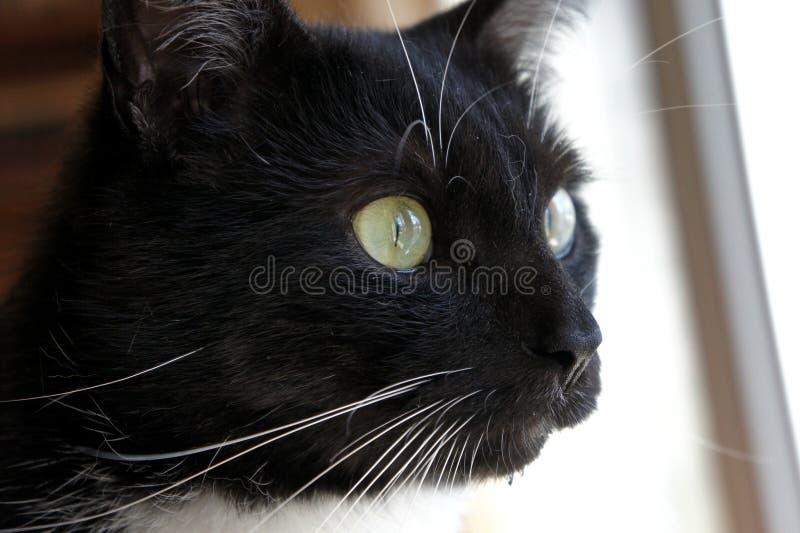 Χρώμα γατών στοκ εικόνες