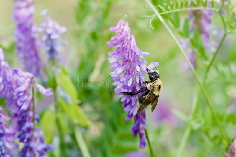 χρώμα μελισσών στοκ φωτογραφία