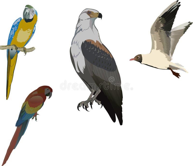 χρώμα συλλογής πουλιών ελεύθερη απεικόνιση δικαιώματος
