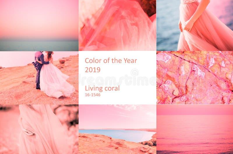 Χρώμα της επιγραφής κοραλλιών διαβίωσης έτους 2019 στοκ φωτογραφία με δικαίωμα ελεύθερης χρήσης