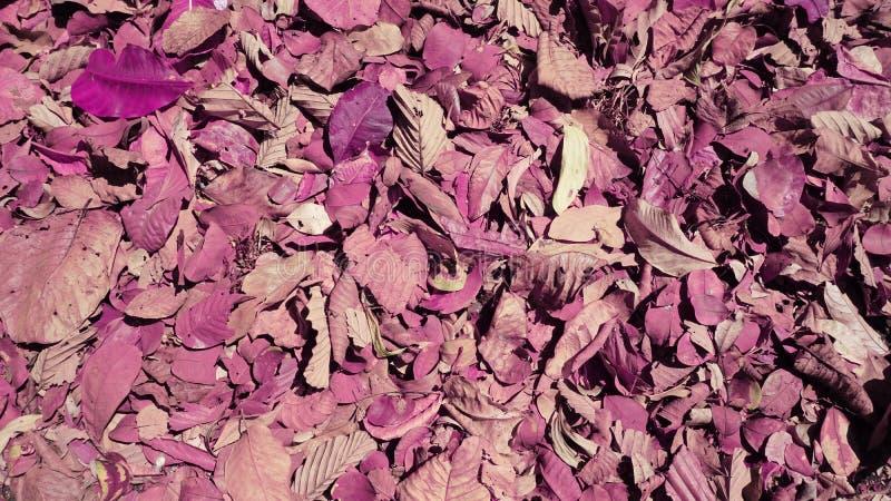 Χρώμα του υποβάθρου φύλλων στοκ εικόνες με δικαίωμα ελεύθερης χρήσης