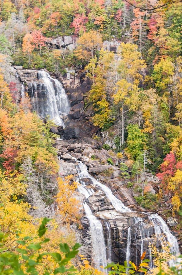 Χρώμα φθινοπώρου στο δάσος της βόρειας Καρολίνας στοκ φωτογραφίες