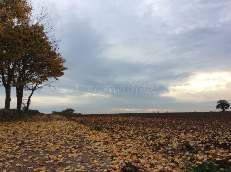 Download Χρώμα φθινοπώρου στοκ εικόνα. εικόνα από φθινοπώρου, δέντρα - 62704949
