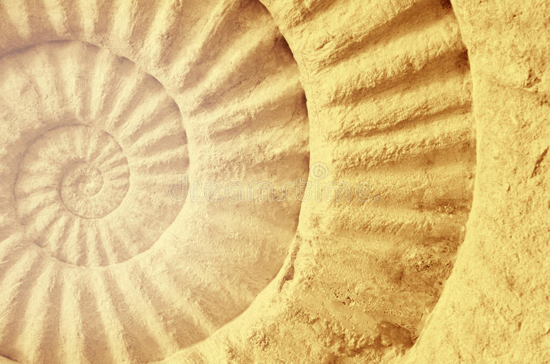 Χρώμα ammonite του προϊστορικού απολιθώματος στοκ φωτογραφία με δικαίωμα ελεύθερης χρήσης